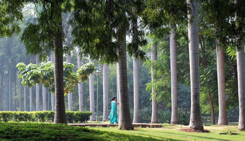 Lodi Garden Lodi Road Benjamuna 39 S Blog